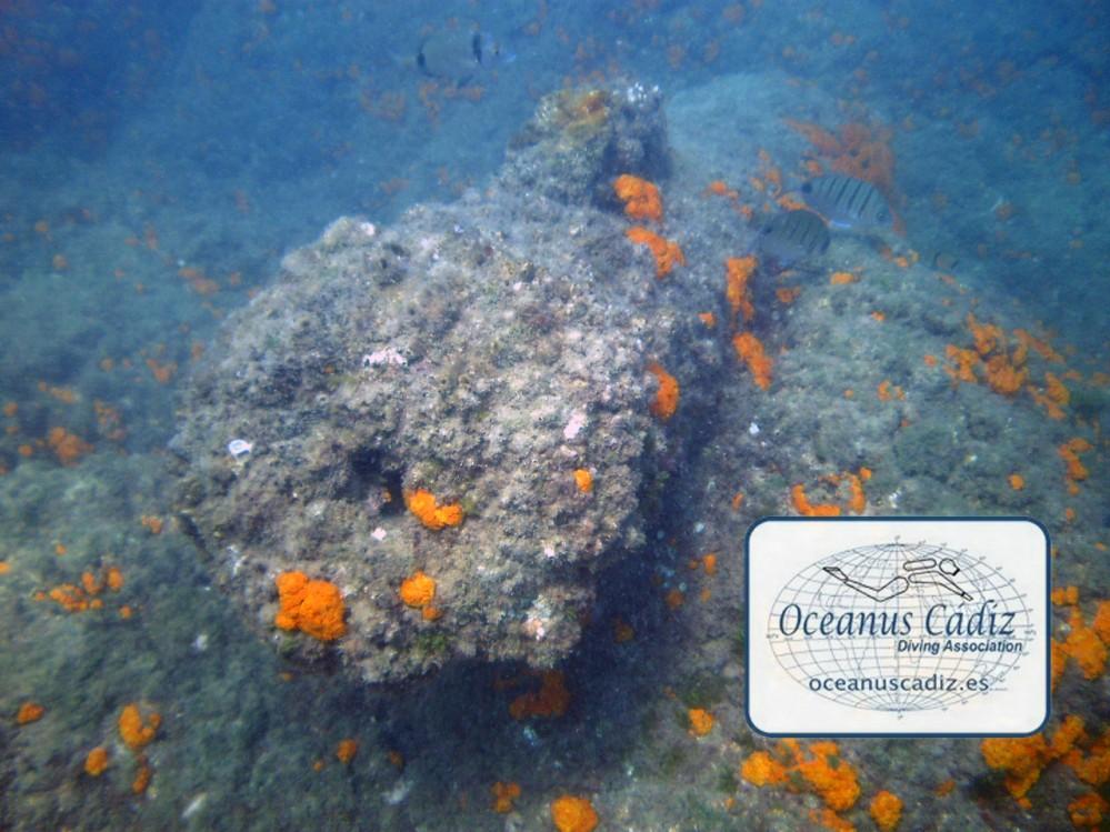Fuente: http://www.oceanuscadiz.es/